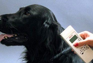Животные в России получат ID