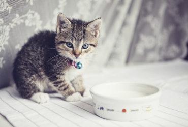 Раны у животных: симптомы и лечение