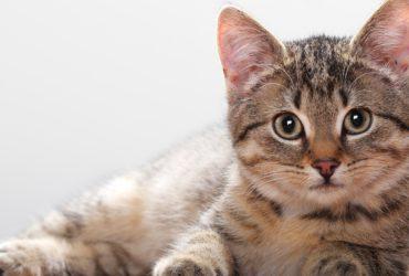 Лабораторная диагностика заболеваний кошек