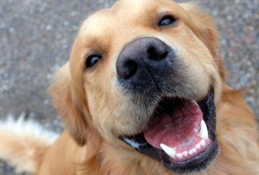 Невыпавшие молочные зубы у собак