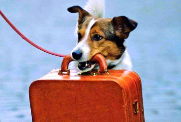 Готовимся к отпуску: аптечка четвероногому другу и перевозка животного