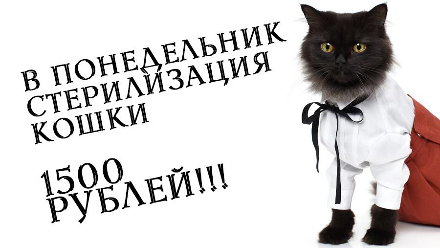 Стерилизация кошки В ПОНЕДЕЛЬНИК 1500 рублей