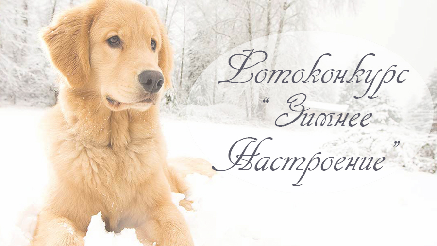 АКЦИЯ ЗАВЕРШЕНА ФОТОКОНКУРС