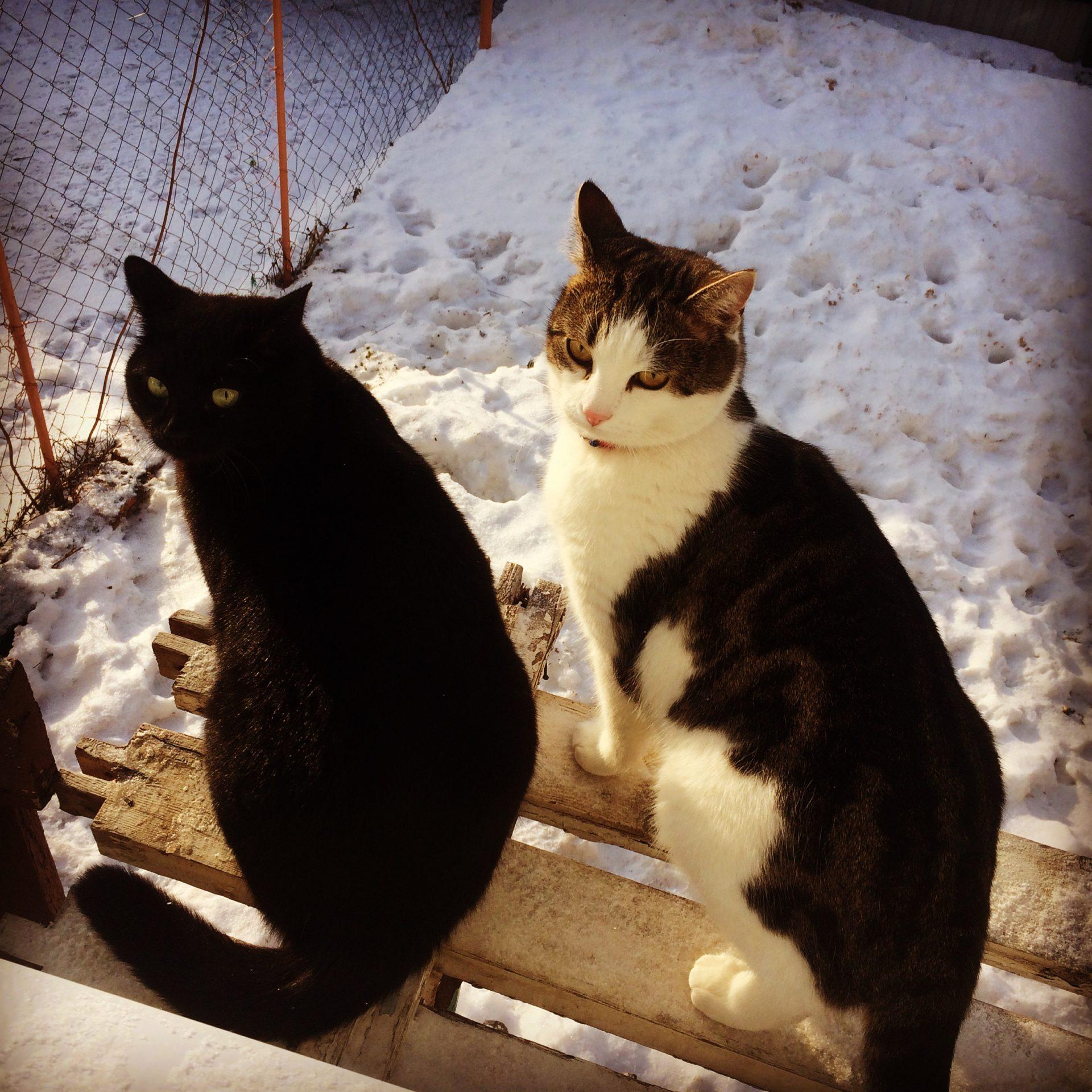 Макс и Рикс