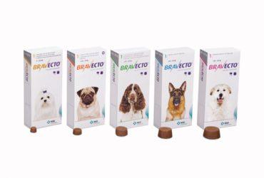 Бравекто для собак – таблетки от клещей и блох