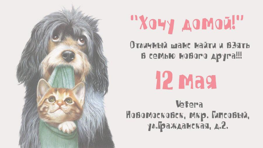 """АКЦИЯ ЗАВЕРШЕНА Выставка бездомных животных """"Хочу домой"""""""