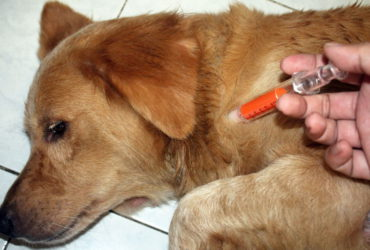 Глисты у собак: признаки, симптомы, лечение