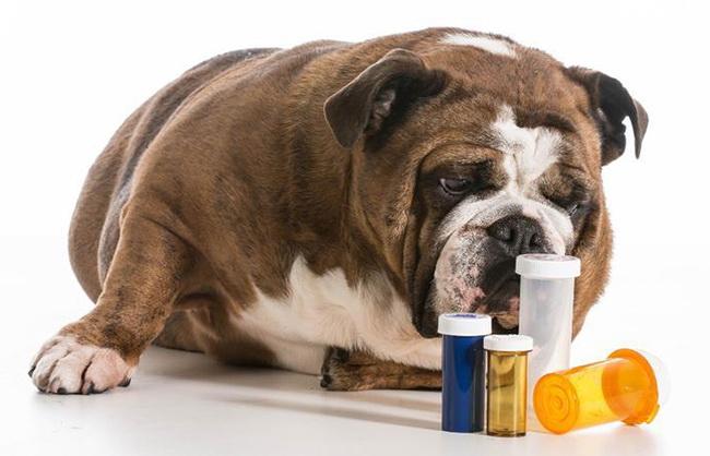 Какие препараты выбрать для дегельминтизации?