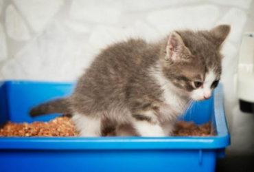 Понос у кошки: лечим расстройство желудка правильно