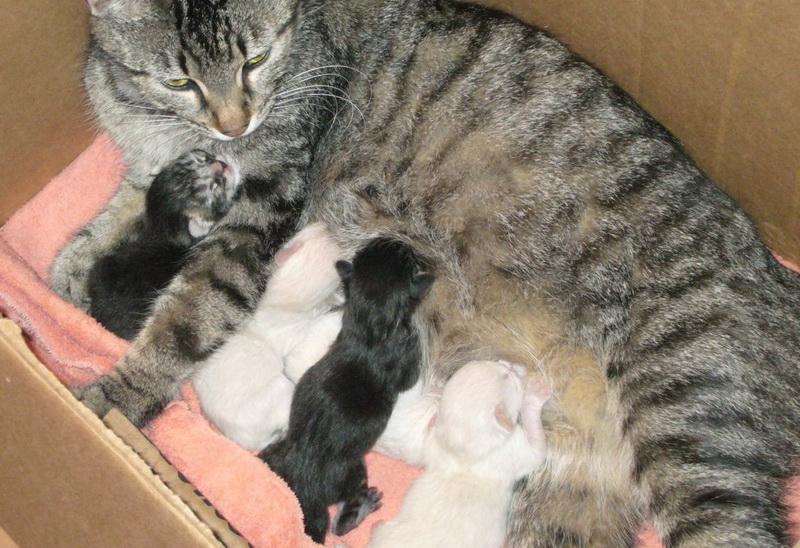 Роды у кошки - важно знать