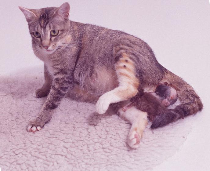 Когда животное может рожать?