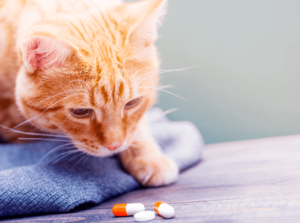 Меры профилактики рвоты у кошек