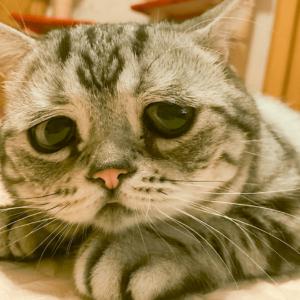 Чем может быть вызвана рвота у кошек?
