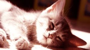 Рвота у котов