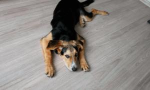 Как выявить дископатию у собак?