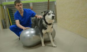 Лечение дископатии у собак