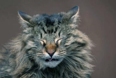 Чих у кошек