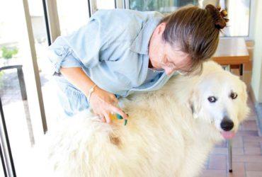 Дерматологические заболевания у собак