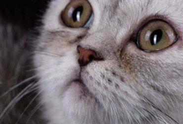 Основные виды заболеваний глаз у кошек