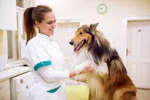 Как оказать первую помощь собаке при кровотечениях