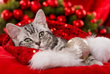 5 опасностей для кота, актуальных в Новый год