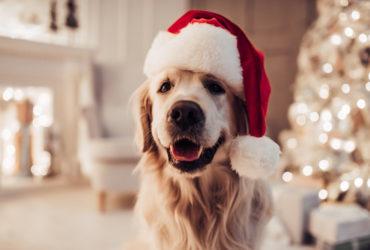 Собака и Новый год – опасности праздников для питомцев.