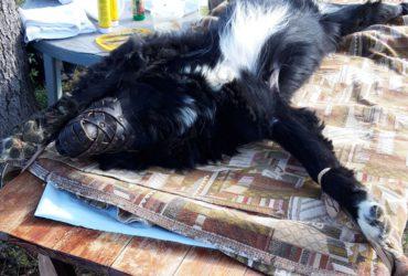 Вызов ветеринара на дом – когда это оправдано?