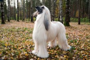 правильный уход за шерстью собак