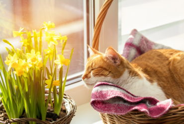 Весенние заболевания кошек. Чем опасен весенний сезон для домашнего любимца?