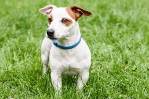 Защита от клещей для собак