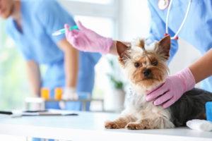 Прививка у собак - профилактика заболеваний