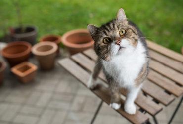 Вестибулярный синдром у кошек