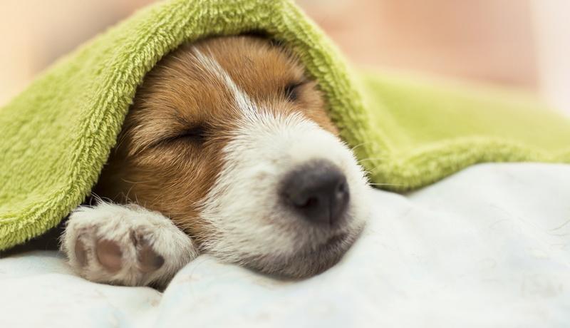 неотложная помощь при тепловом ударе у собаки