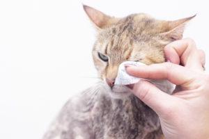 Лечение слезотечения у кошек