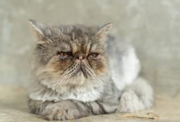 Слезятся глаза у кота: причины, лечение и профилактика