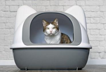 Причины появления кошачьих меток и способы борьбы с ними