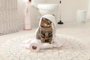 Кошку нельзя наказывать за метки.