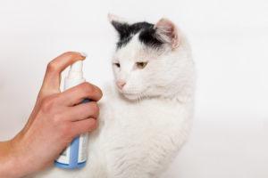 Профилактические методы борьбы с паразитами у кошек