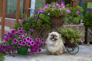 Восстановление после инсульта у собак