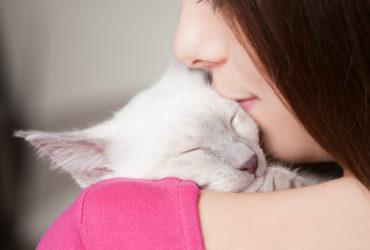 Рахит у котят. Симптомы, причины возникновения и лечение