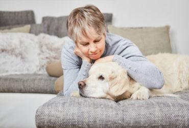Инсульт у собак: симптомы и лечение