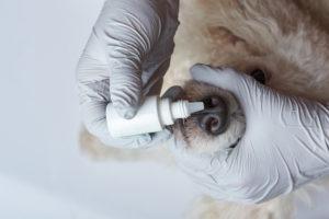Капли для носа помогут питомцу легче дышать при насморке.