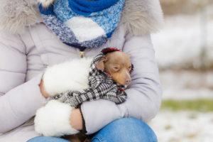 Переохлаждение - причина появления насморка у собак
