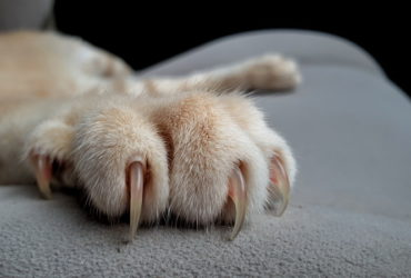 Болезни лап у кошек