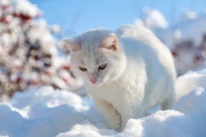 Переохлаждение - причина возникновения пододерматита у кошек.
