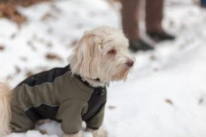 Утепление питомца в холодное время сохранит его здоровье.