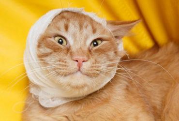 Почему у котов могут гнить уши?
