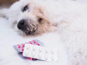 Какими лекарствами лечить цистит у собак?