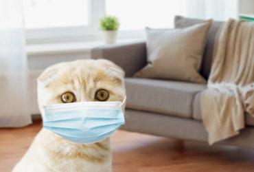 О коронавирусе у кошек