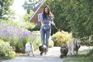 Для профилактики лишая у собак рекомендуется гулять в проверенных местах